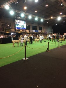 Line up at the National Show, Telford 2016