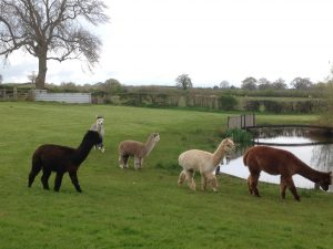 Girls looking around their new field.